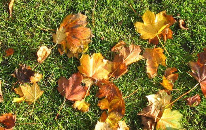 Herbstrasen