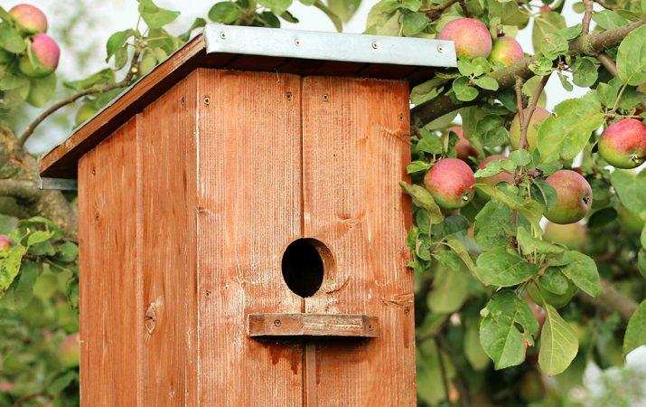 Vogelhaus selber bauen Anleitung